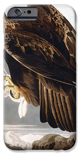 Golden Eagle IPhone Case by John James Audubon