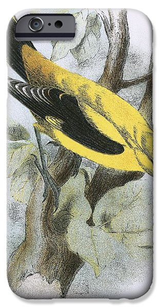 Golden Oriole IPhone 6s Case by English School