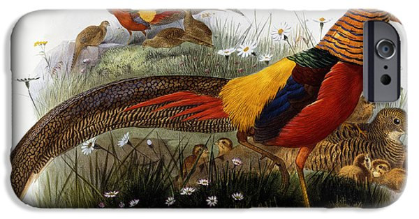 Golden Pheasants IPhone 6s Case by Joseph Wolf