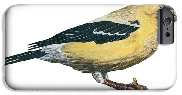 Goldfinch  IPhone 6s Case by Anonymous
