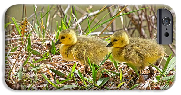 Gosling iPhone 6s Case - Little Ones by Betsy Knapp