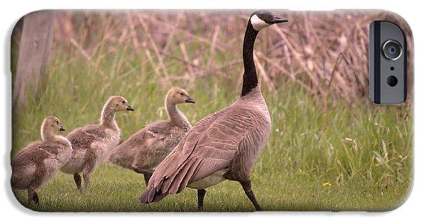 Gosling iPhone 6s Case - Goslings On A Walk by Jeff Swan