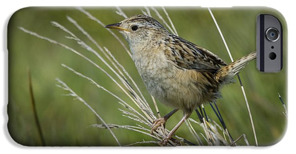 Grass Wren IPhone 6s Case by John Shaw