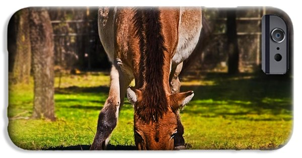Grazing With An Attitude IPhone 6s Case by Miroslava Jurcik