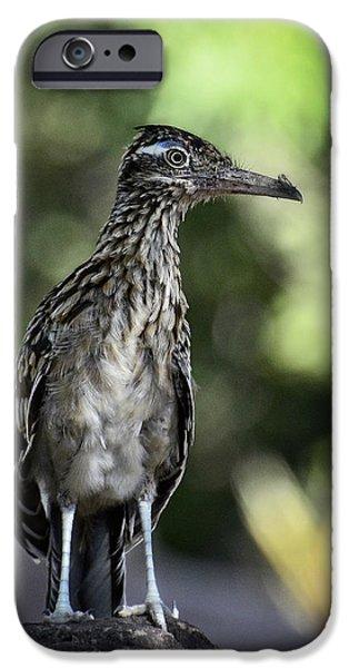 Greater Roadrunner  IPhone 6s Case by Saija  Lehtonen