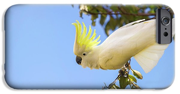 Cockatoo iPhone 6s Case - Greater Sulphur-crested Cockatoo by Louise Murray
