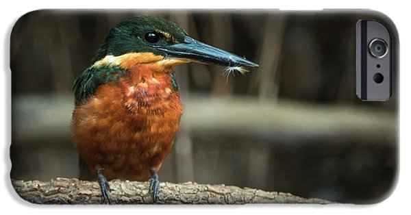Green And Rufous Kingfisher IPhone 6s Case by Pete Oxford