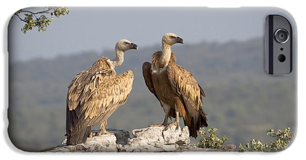 Griffon Vulture Pair Extremadura Spain IPhone 6s Case