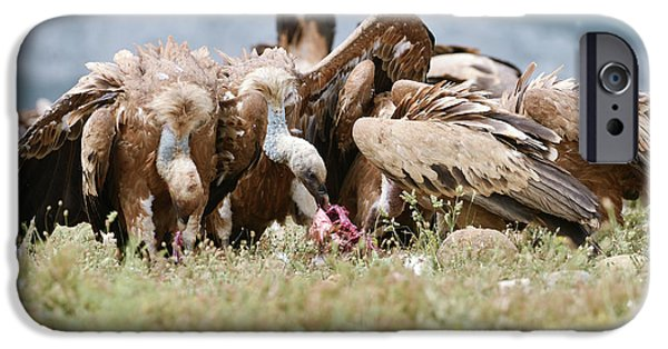 Griffon Vultures Scavenging IPhone 6s Case by Dr P. Marazzi
