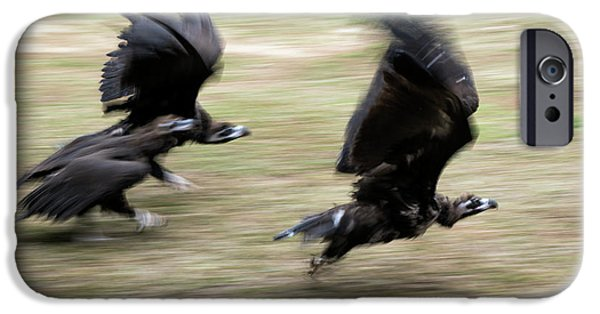 Griffon Vultures Taking Off IPhone 6s Case by Pan Xunbin
