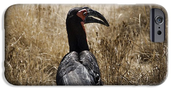 Ground Hornbill-africa IPhone 6s Case by Douglas Barnard
