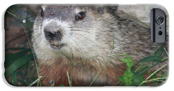 Groundhog Hiding In His Cave IPhone 6s Case