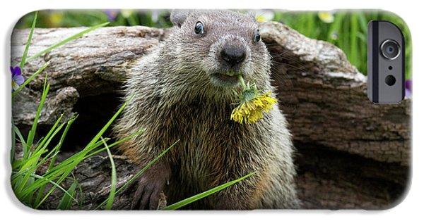 Groundhog  Kit Marmota Monax IPhone 6s Case by Debbie Dicarlo