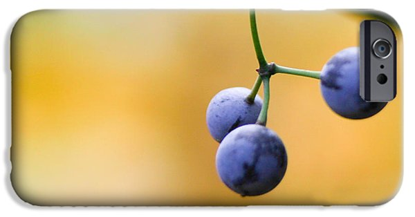 Blue Berry iPhone 6s Case - Hanging Berries by Shane Holsclaw