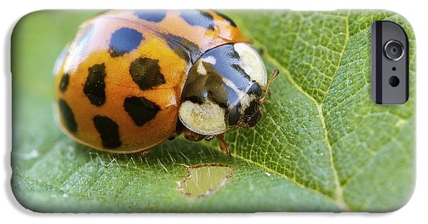 Harlequin Ladybird IPhone 6s Case by Heath Mcdonald