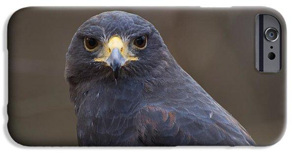 Harris Hawk IPhone 6s Case