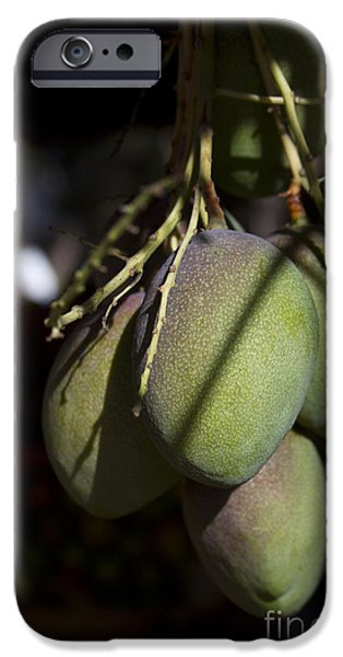 Hawaiian Mango Kihei Maui Hawaii IPhone 6s Case by Sharon Mau