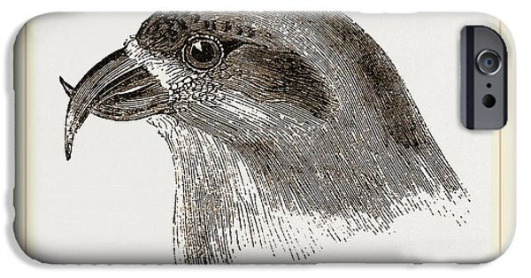Head Of Crossbill IPhone 6s Case by Litz Collection