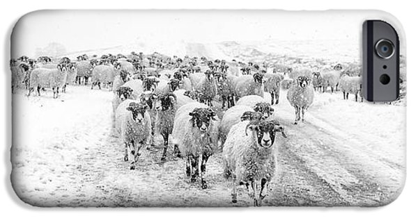 Sheep iPhone 6s Case - Heading For Home by Janet Burdon