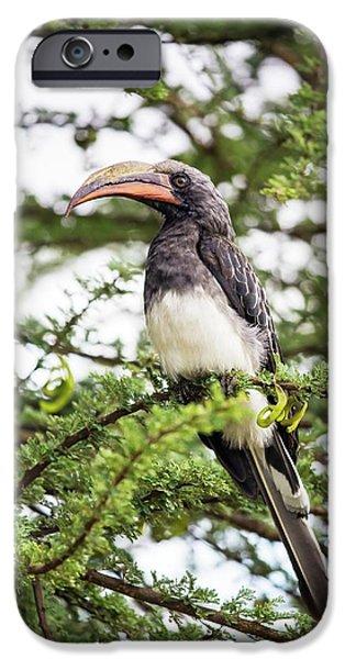 Hemprichs's Hornbill (tockus Hemprichii) IPhone 6s Case by Peter J. Raymond