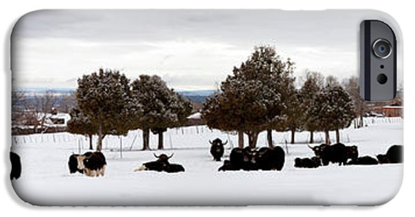 Yak iPhone 6s Case - Herd Of Yaks Bos Grunniens On Snow by Panoramic Images