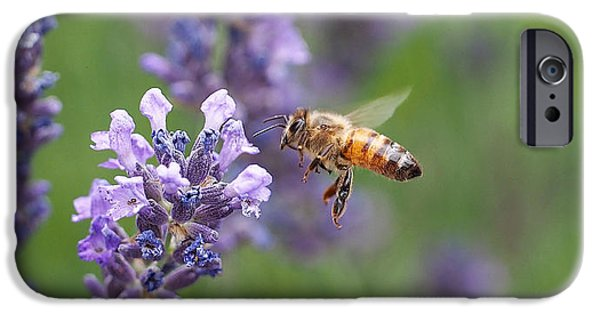 Honey Bee And Lavender IPhone 6s Case