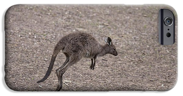 Kangaroo iPhone 6s Case - Hop by Mike  Dawson
