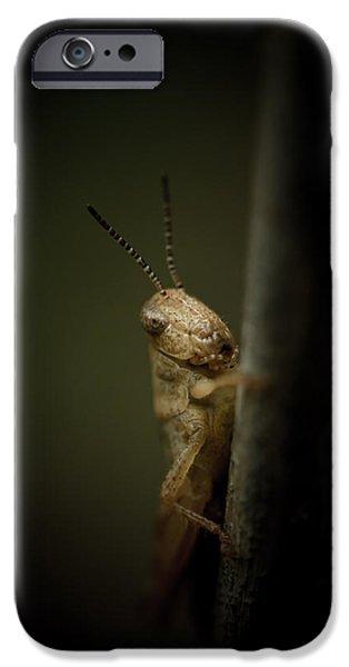 Grasshopper iPhone 6s Case - hop by Shane Holsclaw