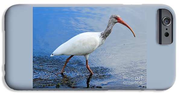 Ibis Visitor IPhone 6s Case by Carol Groenen