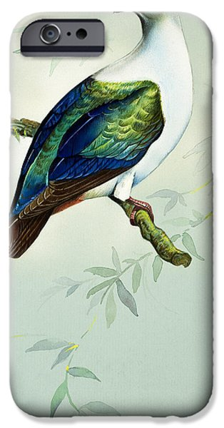 Imperial Fruit Pigeon IPhone 6s Case by Bert Illoss