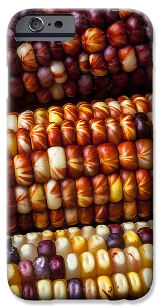 Indian Corn Harvest Time IPhone 6s Case by Garry Gay