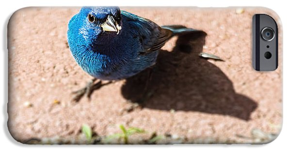 Indigo Bunting IPhone 6s Case