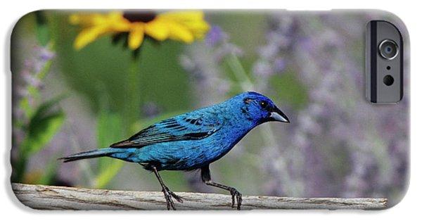 Indigo Bunting (passerina Cyanea IPhone 6s Case by Richard and Susan Day