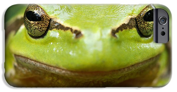It's Not Easy Being Green _ Tree Frog Portrait IPhone 6s Case
