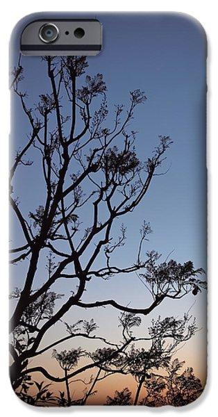 Jacaranda Sunset IPhone 6s Case by Rona Black