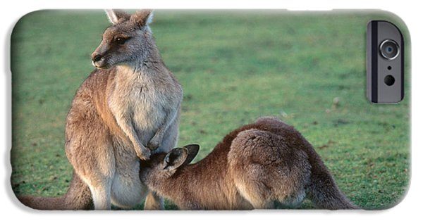 Kangaroo With Joey IPhone 6s Case