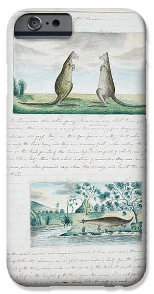 Kangaroo iPhone 6s Case - Kangaroos And Platypus by British Library