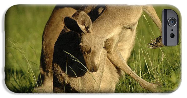 Kangaroos Taking A Bow IPhone 6s Case by Bob Christopher