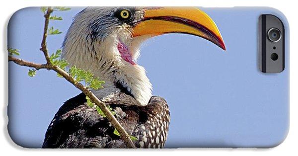 Kenya Profile Of Yellow-billed Hornbill IPhone 6s Case