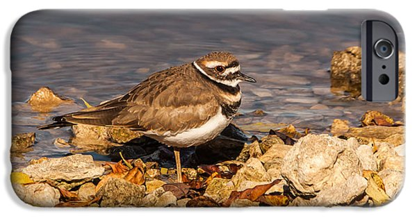 Kildeer On The Rocks IPhone 6s Case by Robert Frederick