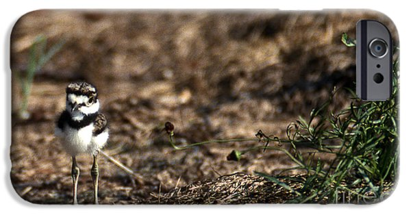 Killdeer Chick IPhone 6s Case by Skip Willits
