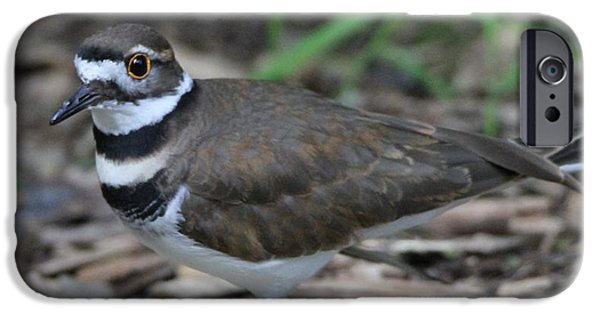 Killdeer IPhone 6s Case by Dan Sproul