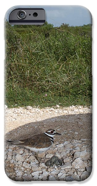 Killdeer Defending Nest IPhone 6s Case by Gregory G. Dimijian