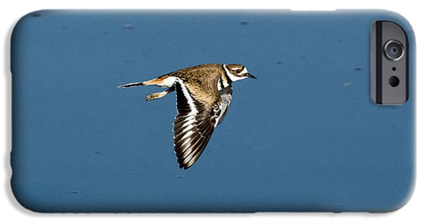 Killdeer In Flight IPhone 6s Case by Anthony Mercieca