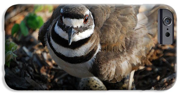 Killdeer Mom IPhone 6s Case by Skip Willits