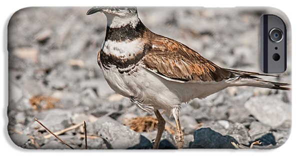 Killdeer Nesting IPhone 6s Case by Lara Ellis
