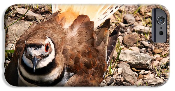 Killdeer On Its Nest IPhone 6s Case by Chris Flees