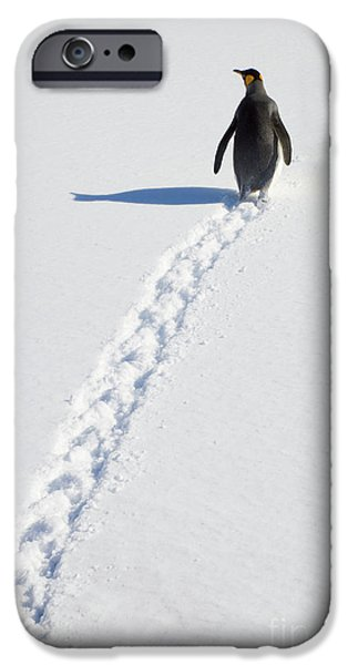 King Penguin And Tracks S Georgia Island IPhone 6s Case by Yva Momatiuk and John Eastcott