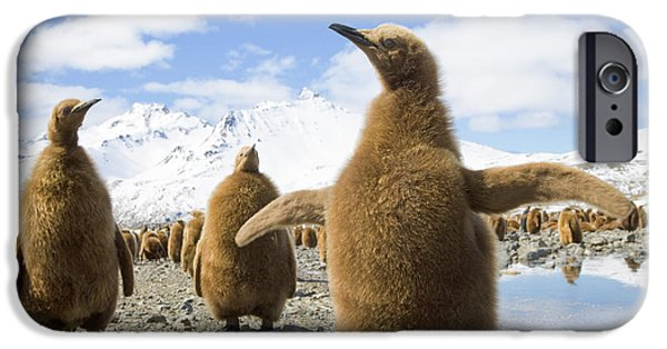 King Penguin Chicks South Georgia Island IPhone 6s Case by Yva Momatiuk and John Eastcott