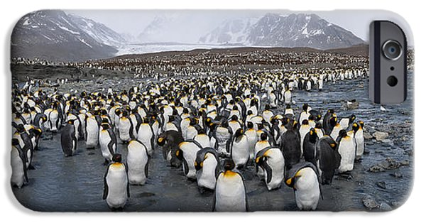 King Penguins Aptenodytes Patagonicus IPhone 6s Case by Panoramic Images